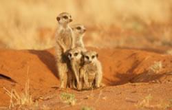 CS Tour Kalahari