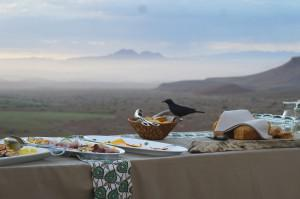 Namibia Damaraland Breakfast Bird