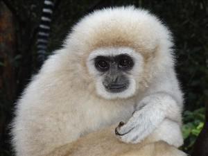 africas gems part b primate