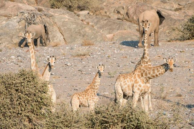 namibia tour skeleton coast