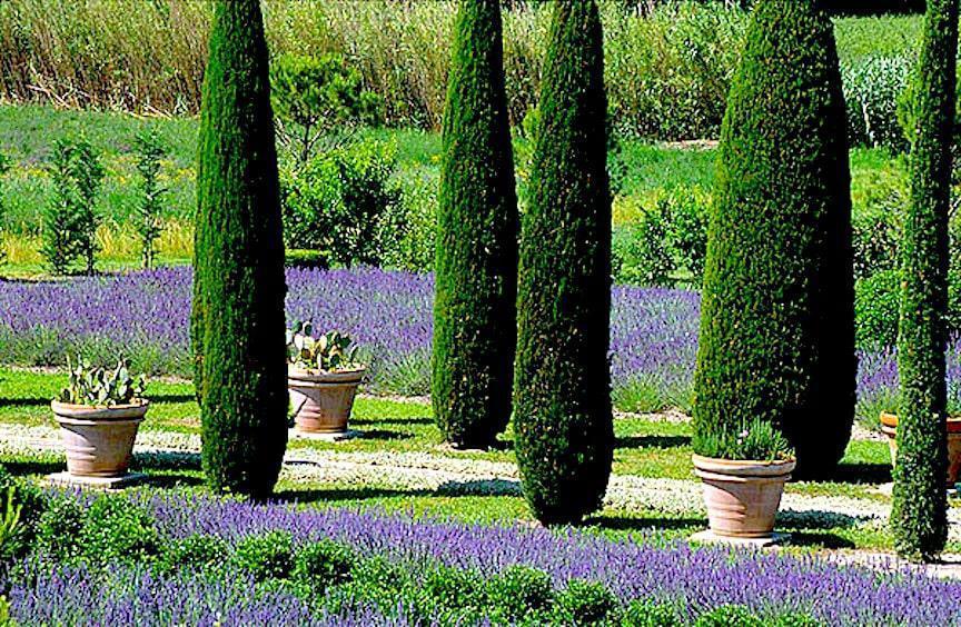 Provence Lavender Garden
