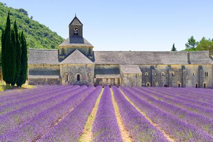 FRA.Provence-Lavender-Field123