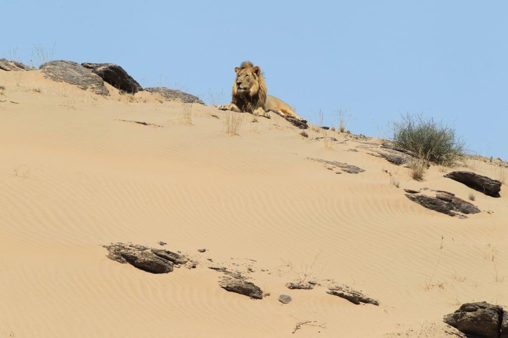 Namibia Hoanib Dr_Flip_Stander©DLC_04