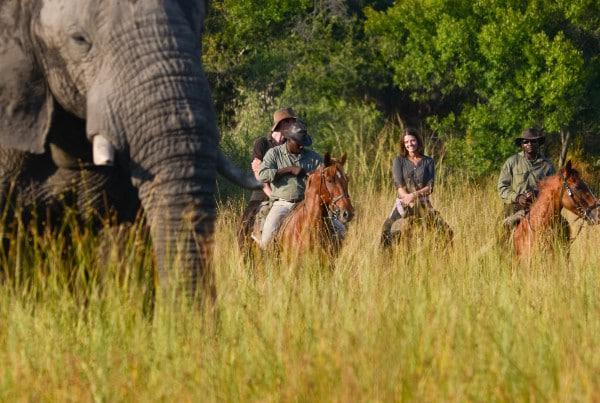 Horseback Safari Cover