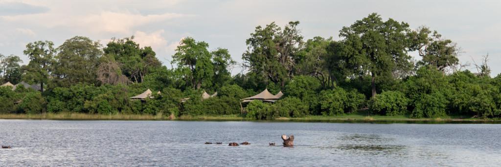 Botswana Hippos