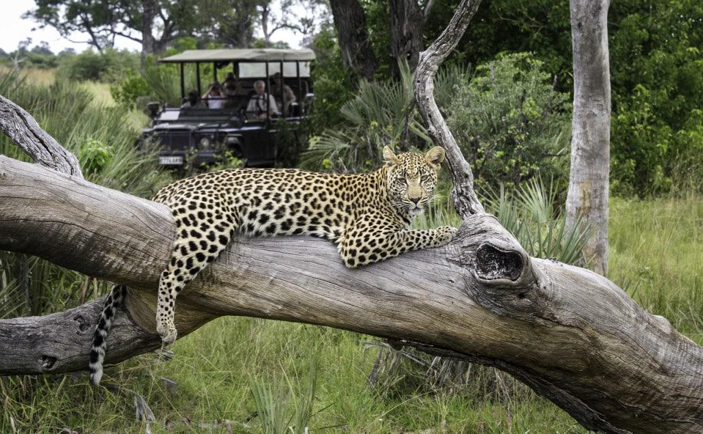 Leopard Game Drive