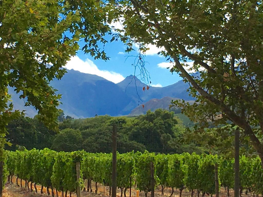 Franschhoek Vines View